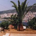 kavala_palm