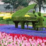 Emirgan Tulip Fesitval 2014-2783