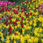 istanbul_tulip_lale_festival_ozgurozkok-16